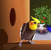 Dessins perroquet gris gabon k18560254 recherche de for Cocktail perroquet