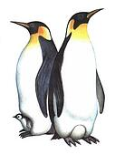 Penguin Illustrations And Clip Art 1 164 Penguin Royalty Free Illustrations Drawings And