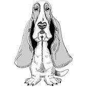 Clipart of basset hound dog cartoon for coloring book k13060092 ...