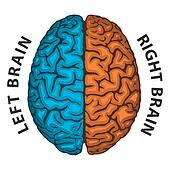 Stock Illustrations of Brain, right half ca109010 - Search ...