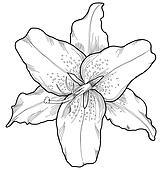 Clip Art of Juniper vintage engraving k6392689 - Search ...