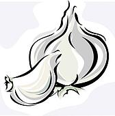 Garlic Stock Illustration Images. 675 garlic illustrations ...