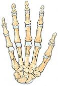 Palmar Illustrations and Stock Art. 67 palmar illustration ...